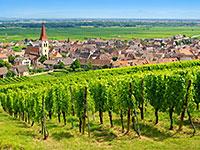 Alsace vignoble, route des vins